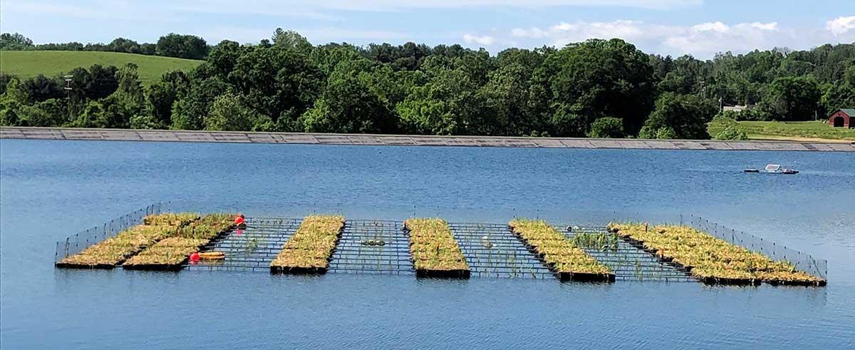 Restore Habitat And Fisheries