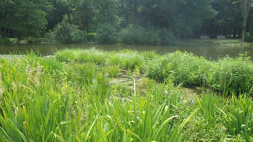 Wetland Solutions
