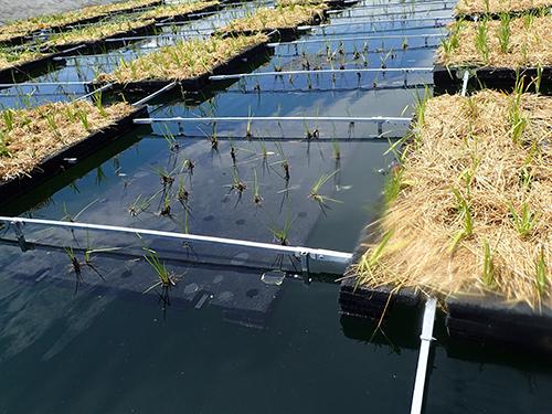 Submerged Floating Wetlands
